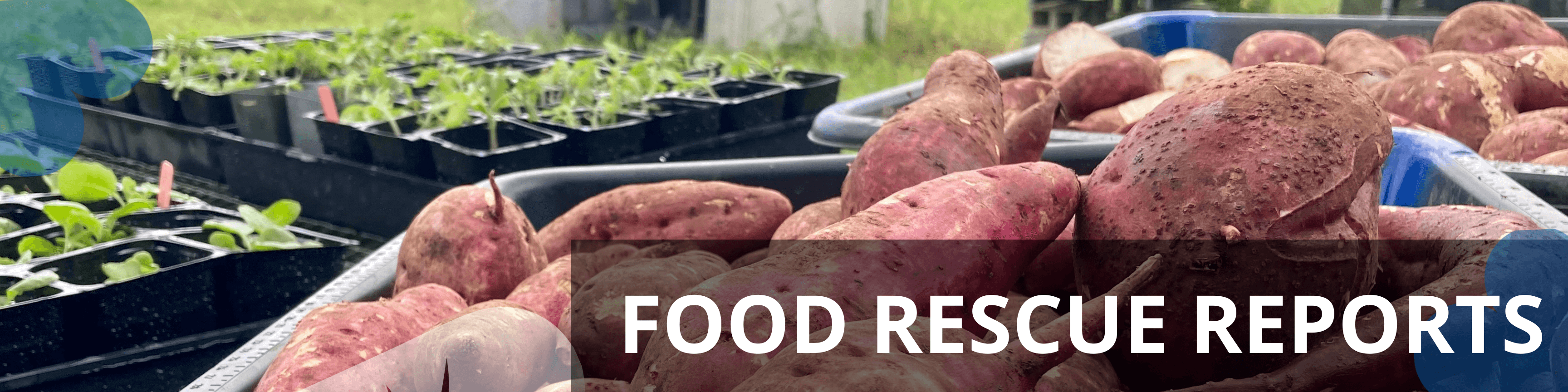 Food rescue reports page banner_LP